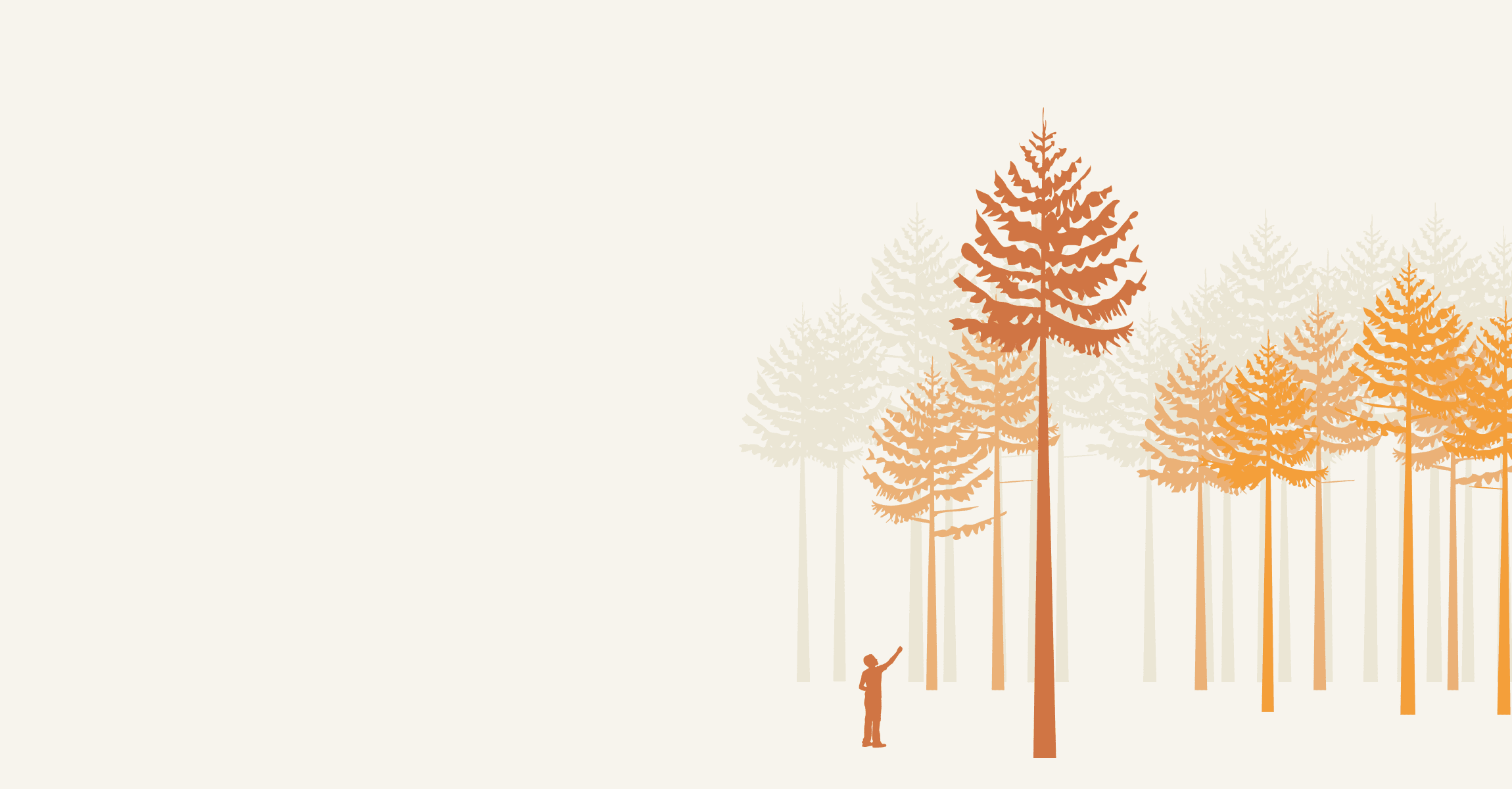 a forest comprised of tall trees, a young boy looks up at the tallest