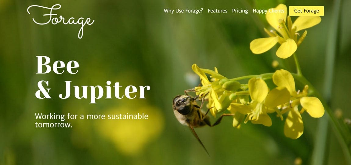 a website showing a a been harvesting a flower